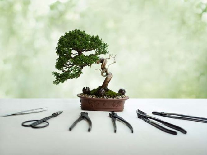 hub-bonsai-1.jpg